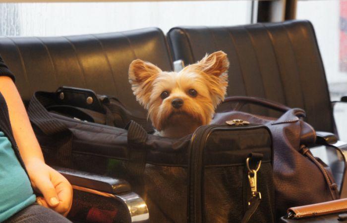 Победа что нельзя в багаж - животные