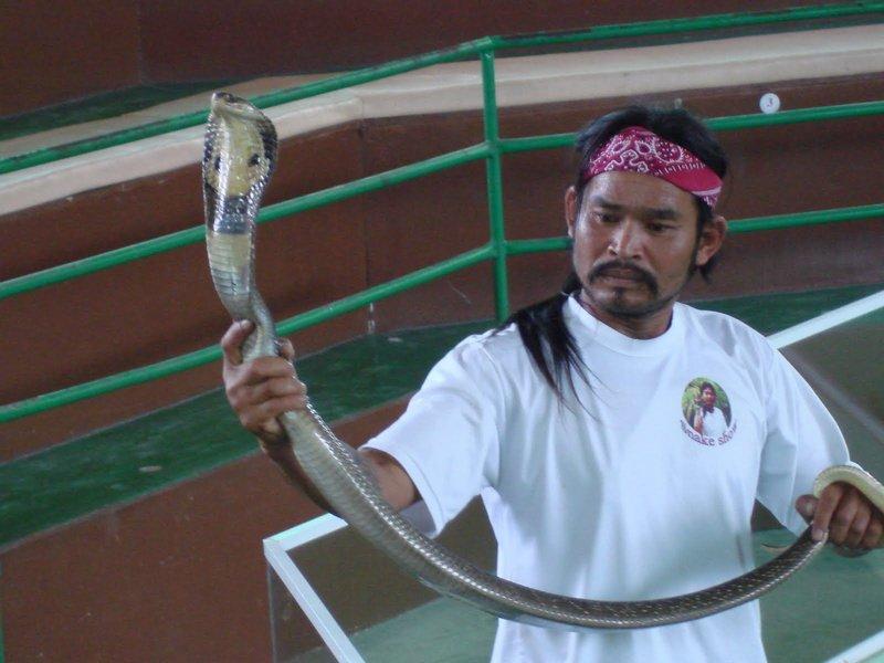Крокодилы и змеи в Египте